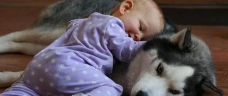 baba és kutyaja