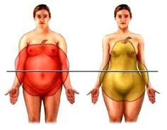 alma elhízás